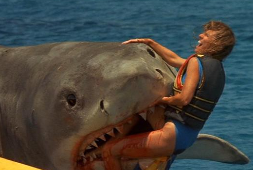 Fucking sharks...